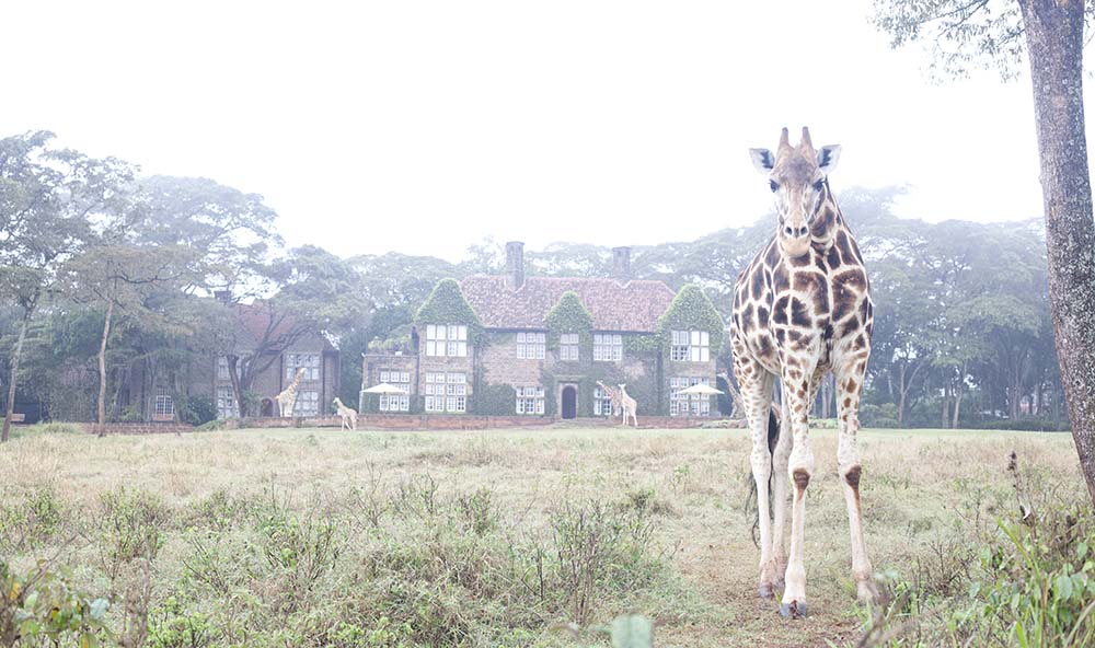 Giraffe Manor Kenya 7