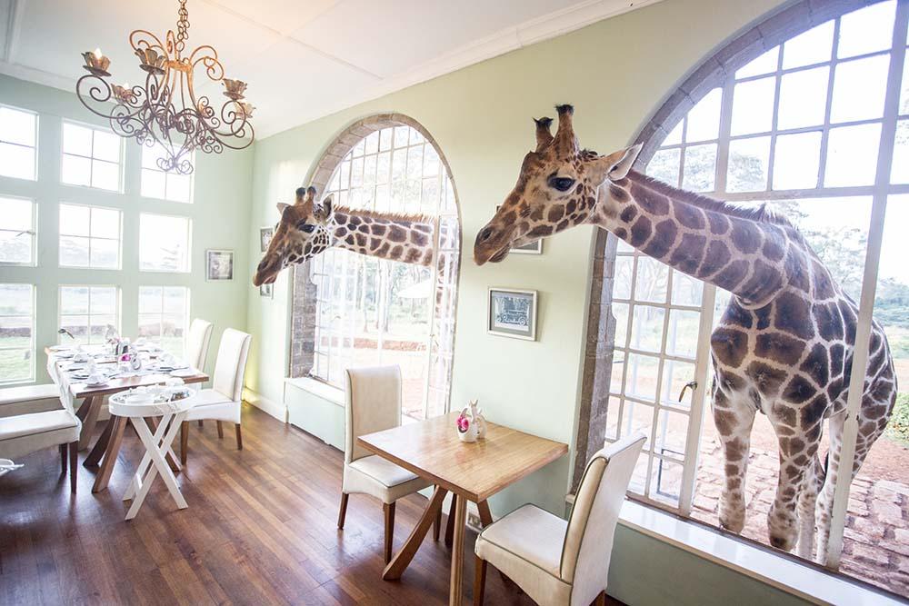 Giraffe Manor Kenya 3
